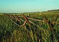 NRCSCO01074 - Colorado (1535)(NRCS Photo Gallery).jpg