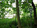 NSG Starnberger See Ostufer-1.jpg