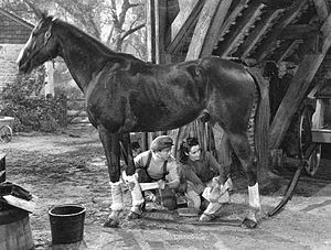 National Velvet (film) - Mickey Rooney, Elizabeth Taylor and The Pie in National Velvet