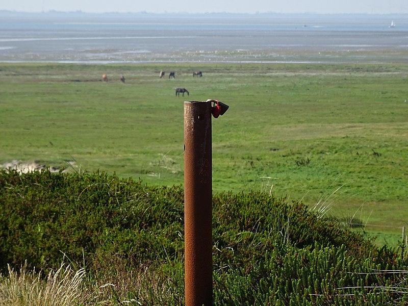 File:Nationalpark Niedersächsisches Wattenmeer - Spiekeroog - Ostergroen (2).jpg
