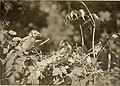 Nature and the camera; how to photograph live birds and their nests; animals, wild and tame; reptiles; insects; fish and other aquatic forms; flowers, trees, and fungi (1902) (14563535777).jpg