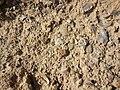 Nature des Monts Beni Chougranes Mohammadia 02.jpg
