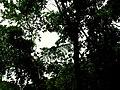 Natureza - panoramio - Alexandre Possi (10).jpg