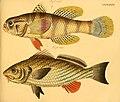 Naturgeschichte in Bildern mit erläuterndem Text (Taf. XCIX) (6058675011).jpg