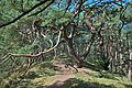 Naturpark Insel Usedom Bannwald bei Trassenheide.jpg
