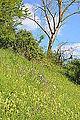 Naturschutzgebiet Aabereich Mellingen 4.JPG