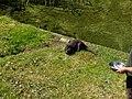 Natuurpark Lelystad - Otter (Lutrinae).jpg