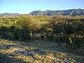 Near Calvillo, Aguascalientes (5710483628).jpg