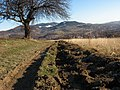 Near Limanowa - panoramio.jpg