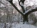 Neuenkirchen NSG Moorrinne von Klein Salitz bis zum Neuenkirchener See 2013-01-15 038.jpg