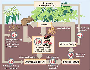 Ecological economics - Image: Nitrogen Cycle