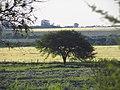 Nogoyá, Entre Ríos, Argentina - panoramio (131).jpg