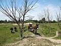 Noon in Arles - panoramio.jpg