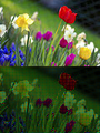 Normal and Bayer Filter (120px-Colorful spring garden).png