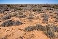 North of the Jarilla Mountains - Flickr - aspidoscelis (5).jpg