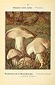 Nouvel atlas de poche des champignons comestibles et vénéneux (Pl. 12) (6459627035).jpg