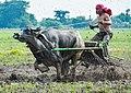 Nueva Ecija -Carabao Racing.jpg