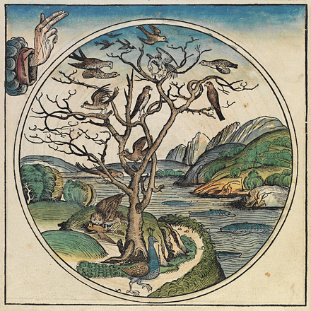 The Fifth day of creation Nuremberg chronicles - f 4v.png