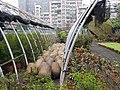 Nursery in Water Park 水源地苗圃 - panoramio.jpg