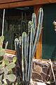 Nyíregyháza Zoo, succulents-7.jpg