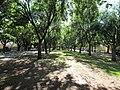 OIC rose park alexandra 2.jpg
