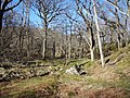 Oak Woodland at Tollie - geograph.org.uk - 364573.jpg