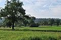 Obstwiese im Greutterwald (1).jpg
