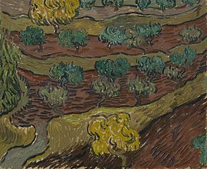 Olive Trees on a Hillside
