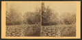 On Lycoming Creek. (The marshy banks.), by Moran, John, 1831-1903.png