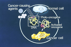 Illustration of how a normal cell is converted to a cancer cell, when