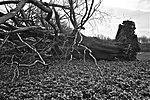 Opfer des Orkans Wiebke im Schlosspark Brühl (LM20737).jpg