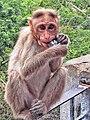 Oreo Monkey.jpg