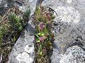 Orquídeas (13895024673).jpg