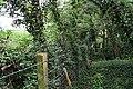 Overgrown footbridge by the M50 - geograph.org.uk - 795164.jpg