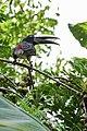 Pássaro conhecido como Filipe.jpg