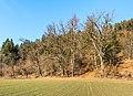 Pörtschach Winklern Quellweg Laubbäume am Wanderweg S-Ansicht 12012020 8033.jpg