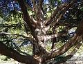 P1280340 Paris IV square Barye arbre rwk.jpg