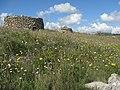PINNETTOS (Borutta) 11.10.09 - panoramio.jpg