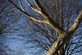 PM 069228 B Oudenaarde.jpg