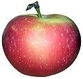 POL apple.jpg