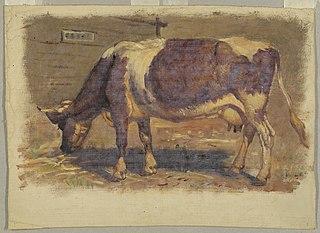 Studies. Cows