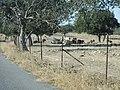 Paisaje de la Provincia de Cáceres 50.jpg