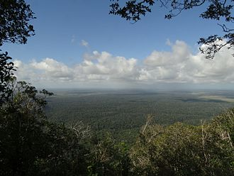 Atlantic Forest - Atlantic Forest in Bahia State, Brazil