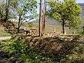 Parambikulam Tiger Reserve - panoramio (6).jpg