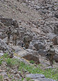 Paratroopers on watch in Ghazni 120530-A-KT814-039.jpg