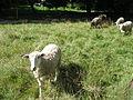 Parc agricole du Bois-de-la-Roche 014.jpg