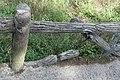 Parc des Buttes-Chaumont, garde-corps en béton 09.jpg