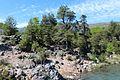 Parque Nacional 7 Tazas, Región Del Maule, Chile - panoramio (13).jpg