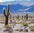Parque Nacional Los cardones.jpg