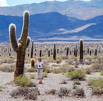Los Cardones National Park - Los Cardones.